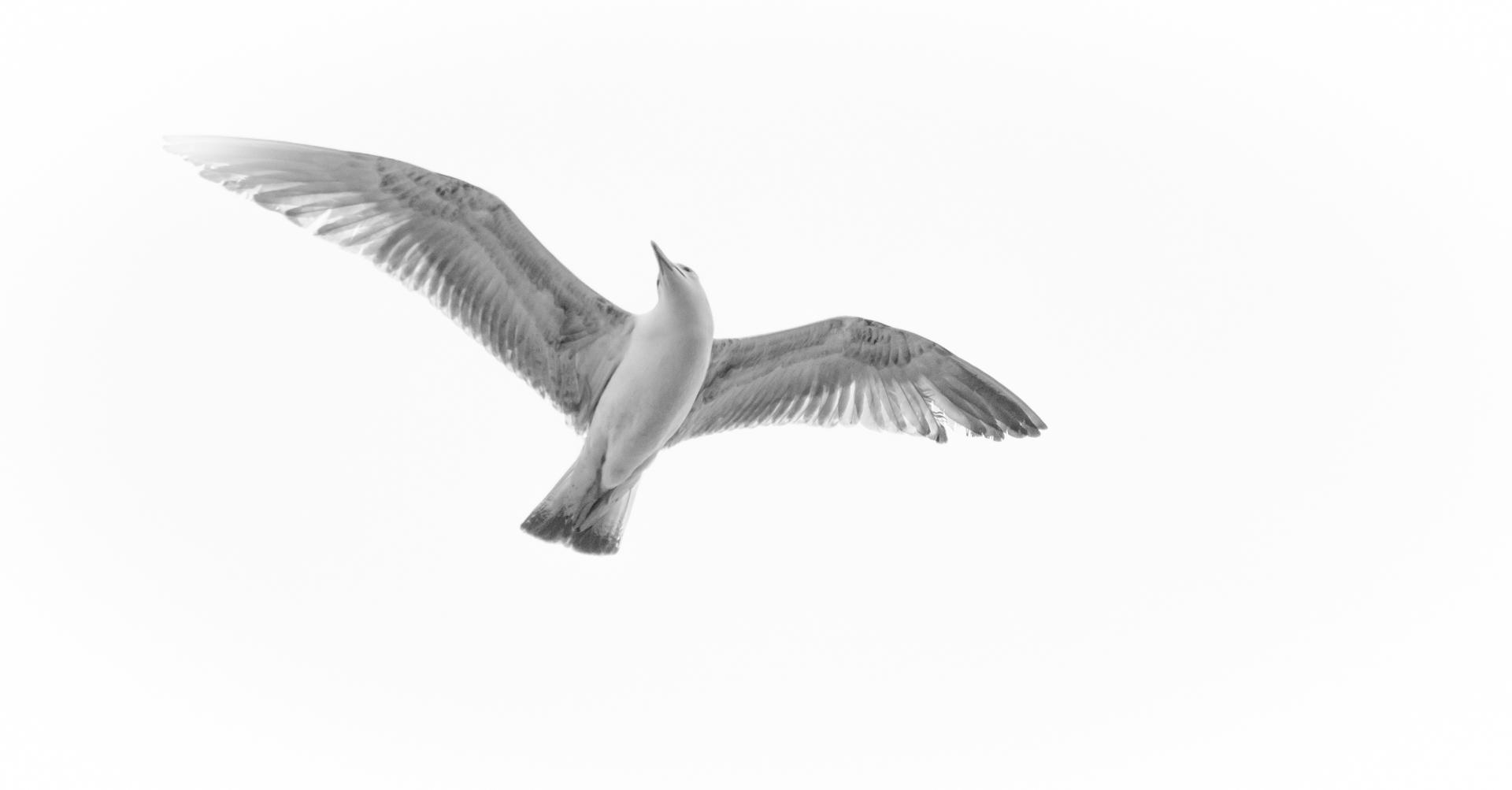 a bird's view